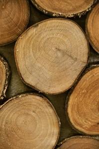 il_legno